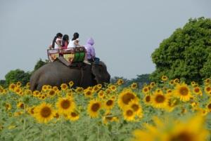 Kayaknya asik naik Gajah sambil menikmati padang bunga matahari :)
