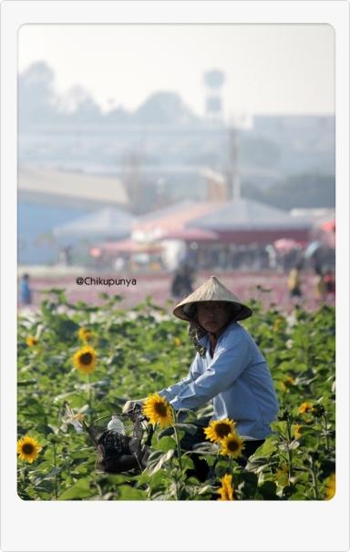 """Si bapak pengawas ladang bunga matahari, tugasnya; """"mengusir"""" para manusia narsis yang ada di tengah ladang bunga :p"""